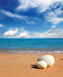 View on seashells on beach Stock Photos