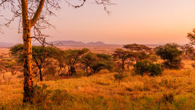 View of the Serengeti. Serengeti means endless Royalty Free Stock Images