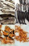 Set of sea food stock photos