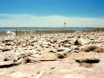 View From Shell Point. View from the beach out toward the water at Shell Point, Florida (USA Stock Image