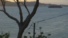 View of ship from land. With a tree in between stock footage