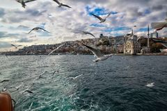 View from the ship to a flying seagull next to, and in the background a view of the architecturas of Turkish Istanbul. Including the Mosque on the shore of the Royalty Free Stock Image