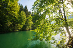 View from shore through trees to mountain lake at dawn Stock Images