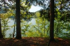View from shore through trees to mountain lake at dawn Royalty Free Stock Photos