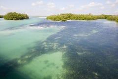 View of Sian Ka'an wiliderness. Area - Yucatan Mexico Stock Photos
