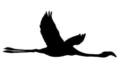 View on the silhouette of a flamingo Stock Images