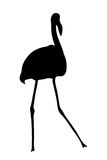 View on the silhouette of a flamingo Royalty Free Stock Images