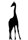 View on the silhouette of a giraffe Royalty Free Stock Images