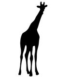 View on the silhouette of a giraffe Stock Photos
