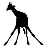 View on the silhouette of a giraffe Stock Photo