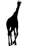 View on the silhouette of a giraffe Royalty Free Stock Photography