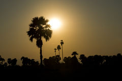 View of silhouette palm trees . Royalty Free Stock Images