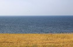 Wheat, sea and sky. The Flag of My Summertime. royalty free stock image
