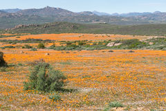 View of Skilpad in the Namaqua National Park Royalty Free Stock Photo