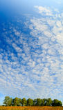 View of the sky above the birch grove Stock Images