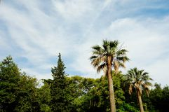View of the sky and generic vegetation Royalty Free Stock Photos