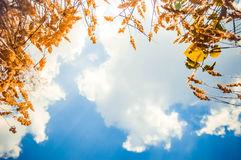 View of the sky, lying in the grass Stock Images