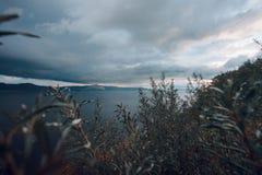 View of the sky and the mountains. Through a bush Stock Photos
