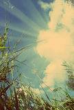 View on sky out of grass - vintage retro style Stock Photography