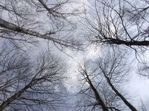 A view of the sky over the trees. Stock Image