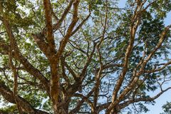 View of the sky through tree branches.  Royalty Free Stock Photos