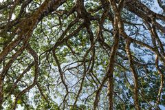 View of the sky through tree branches.  Royalty Free Stock Image