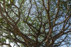 View of the sky through tree branches.  Royalty Free Stock Photo