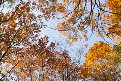 view of the sky through the treetops royalty free stock images
