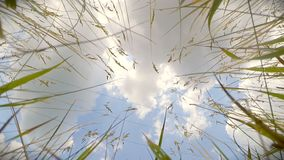 View of the sky with white clouds, lying in the grass. stock footage