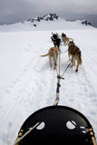 View from Sled Pulled by Dogs on Snow Royalty Free Stock Image