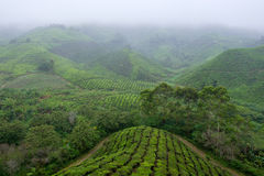 View of slope valley filled with tea plantations covered by fog Stock Images