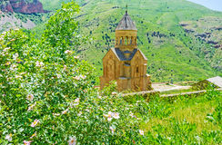 The view from the slope. The wild rose bush in blossom on the slope of Amaghu canyon with the Surb Astvatsatsin Church of Noravank Monastery on the background Stock Photo