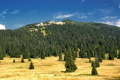 View of the Slovak mountains. Mountain meadow with trees with mountain in background Royalty Free Stock Image