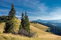View of the Slovak mountains. Mountain meadow with trees with mountain in background Royalty Free Stock Photo