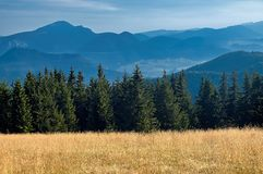 View of the Slovak mountains. Mountain meadow with trees with mountain in background Stock Image