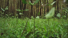 View of small animals eye view stock footage