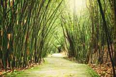 View of the small jungle road. Royalty Free Stock Photography