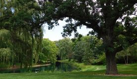 View Of A Small Lake Surrounded By Big Trees stock image