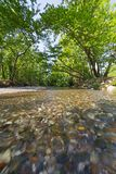 Small river in a green natural environment stock photo