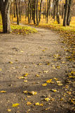 Small road in autumn forest Royalty Free Stock Photography