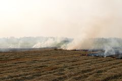 Smoke from burning rice straw in the field. Royalty Free Stock Photo