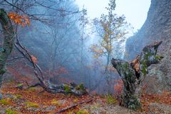View of the snag in the autumn forest royalty free stock image