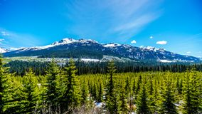 View of the snow capped Coast Mountains along Highway 99, also called The Duffey Lake Road Royalty Free Stock Photography