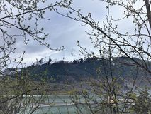 Snow Capped Mountain through tree branches. View of snow capped mountain and Mendenhall Lake through tree branches, near Juneau, Alaska, May 2017 Royalty Free Stock Image