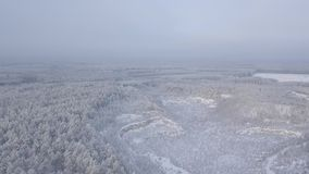 View snow-capped quarry and forest from a bird`s-eye view. You can see a big quarry in the woods stock footage