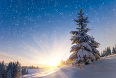 View of snow-covered conifer trees and snow flakes at sunrise. Merry Christmas's or New Year's background. Royalty Free Stock Photo