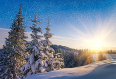 View of snow-covered conifer trees and snow flakes at sunrise. Merry Christmas's or New Year's background. Stock Photos