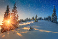View of snow-covered conifer trees and snow flakes at sunrise. Merry Christmas's or New Year's background. Royalty Free Stock Photography