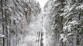 View of the snow-covered country road with pines.  Stock Photos