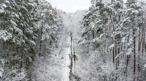View of the snow-covered country road with pines.  Royalty Free Stock Photography